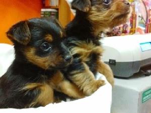 Cucciolandia Pet Shop