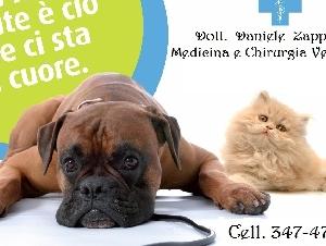 Dott. Daniele Zappulla - Medico Veterinario