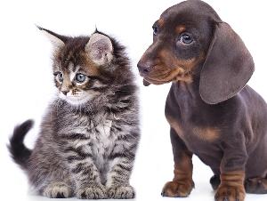 Orni Pet