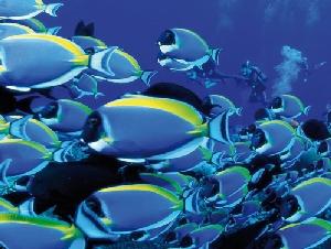 AQUARIUM passione per gli acquari