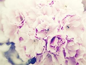 L'Angolino dei fiori